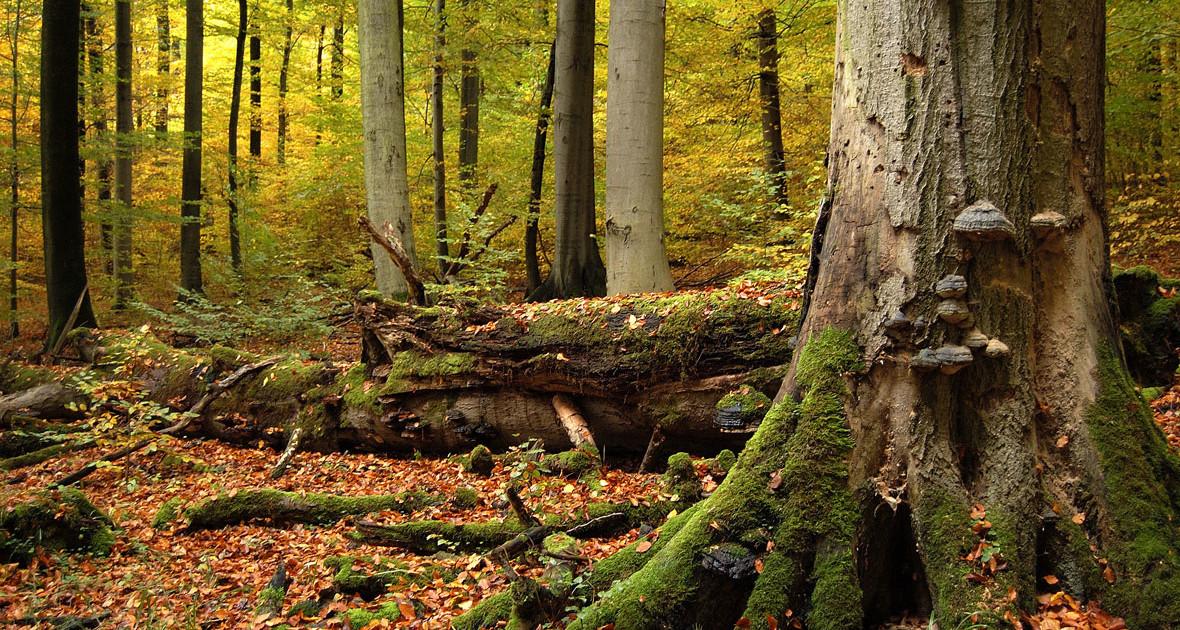 urwälder deutschland