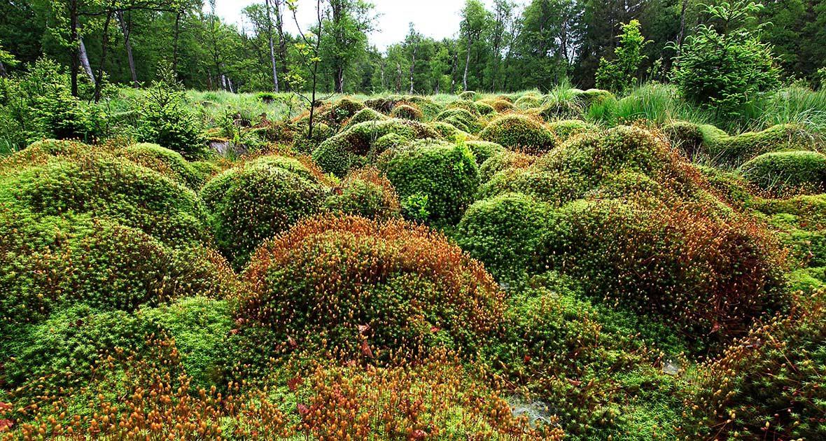 Moor im Nationalpark Hunsrück-Hochwald