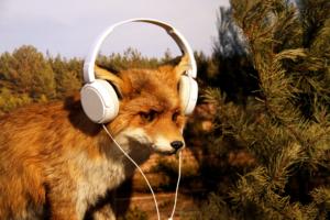 Fuchs mit Kopfhörern
