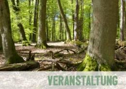 Alte Buchenwälder im UNESCO Weltnaturerbe im Müritz Nationalopark