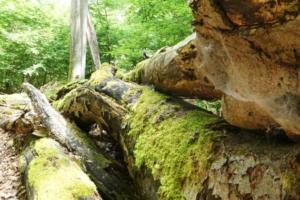 Totholz schafft neuen Lebensraum