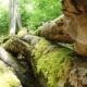 Totholz im Nationalpark Kellerwald Edersee