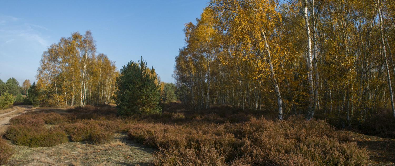 Mit bemerkenswerter Geschwindigkeit erobert sich die Vegetation das Land im Wildnisgebiet Lieberose zurück.