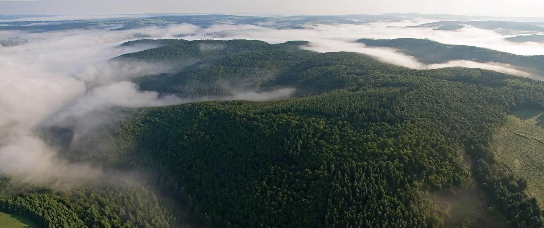 Naturwald Wispertaunus in Hessens größtem zusammenhängenden Waldgebiet